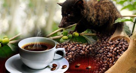 Luwak Coffee bali coffee plantations luwak coffee places to visit