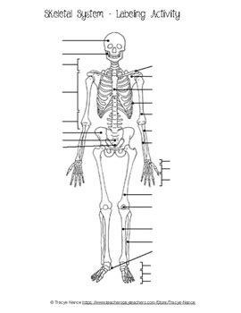 skeletal system diagram pdf skeletal system labeling worksheet by tracye nance tpt