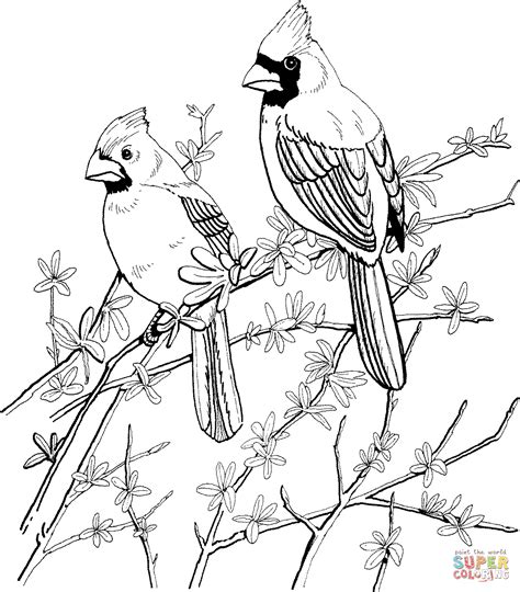coloring pages of red birds two red cardinals coloring online super coloring