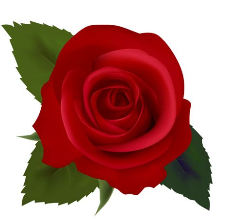 rosa clipart flower clipart clipartsgram