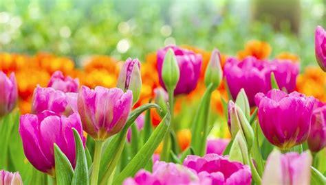 Garten Und Blumen by Blumen Im Garten
