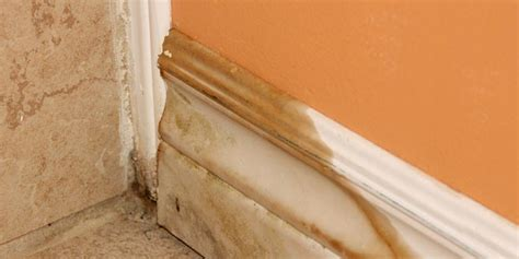 mold in house how air purifiers help kill mold spores allergyandair com