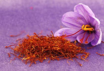 libro la flor del azafrn azafr 225 n 7 propiedades medicinales y efectos beneficiosos