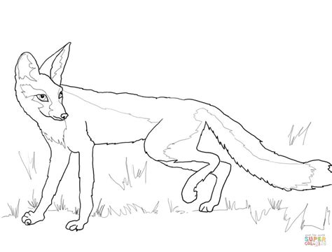swift fox coloring page kit fox coloring page free printable coloring pages