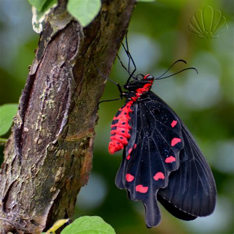 giardino farfalle non pinocchio a collodi lo storico giardino e la