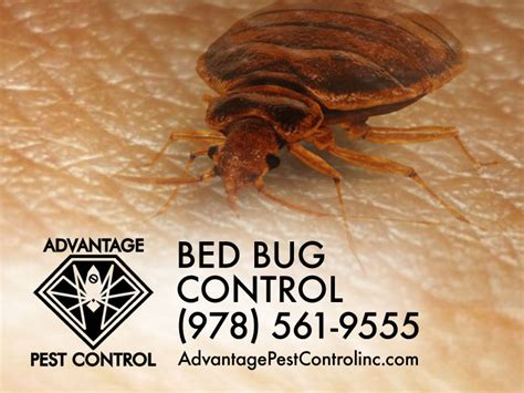 bed bug pest control service bed bug control bed bug control services in new york city