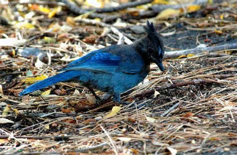 birds of colorado during focus on nature tours from