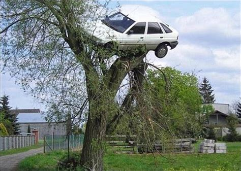 car with tree image car on top of tree 1funny
