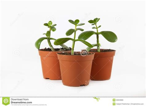 Small Plant Pots Small Plant In Pot Stock Photo Image 50253682