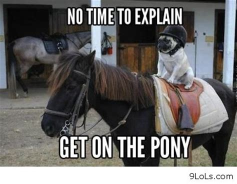 Horse Riding Meme - dog and horse funny images http 9lols com dog and horse