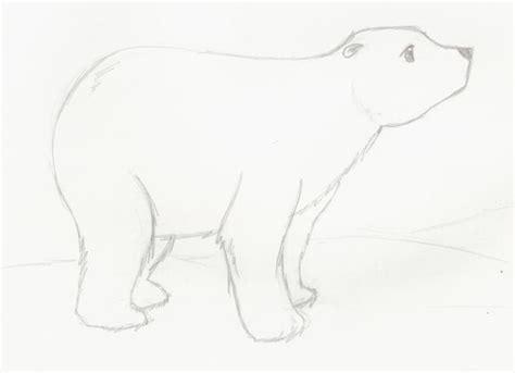imagenes a lapiz de osos oso polar dibujo imagui