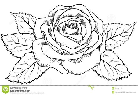 Sketches To Trace by Flower Drawing How To Draw A Drawings How To