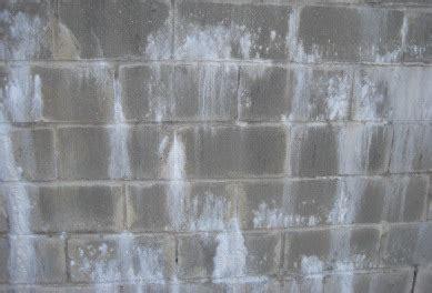 white mold  efflorescencedifferences dangers