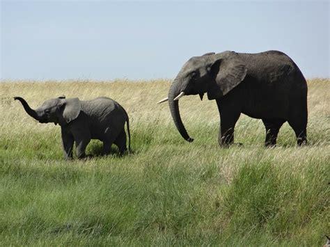 Animals in their natural habitat