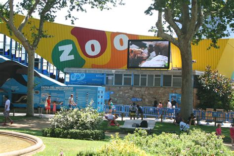 barcelona zoo opening times led dream install a led screen four meters at the