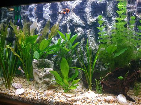 design your own aquarium background print your own aquarium background 1000 aquarium ideas