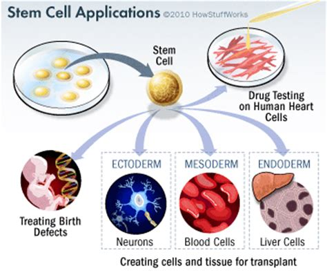 stem cell treatment now stem cell treatment now some alternative using stem cells to treat disease howstuffworks