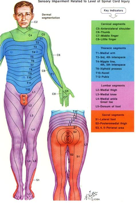 with leg l dermatome chart with symptoms more thing in