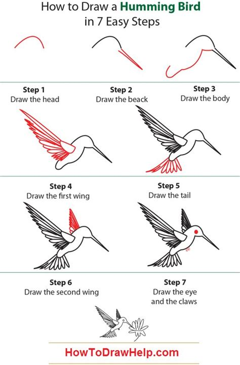 how to draw a humming bird learn to draw pinterest