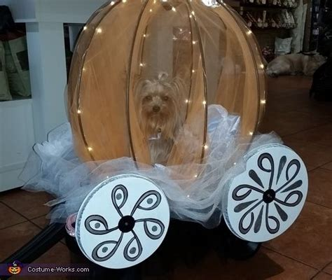 teacup yorkie costumes cinderella costume stove yorkie and a child