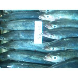 Ikan Deho Beku Tongkol Beku Ikan Beku Size 3 10 Pcs Kg jual ikan moroaji beku ikan layang frozen ikan malalugis beku ikan momar frozen moroaji fish