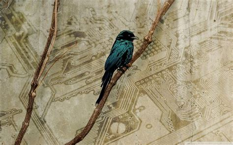 bird wallpaper for walls 17 best images about victorian wallpaper on pinterest victorian gardens antique hardware and