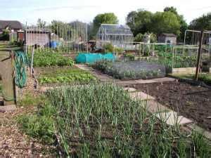 fruit vegetable growing guide   allotment gardens
