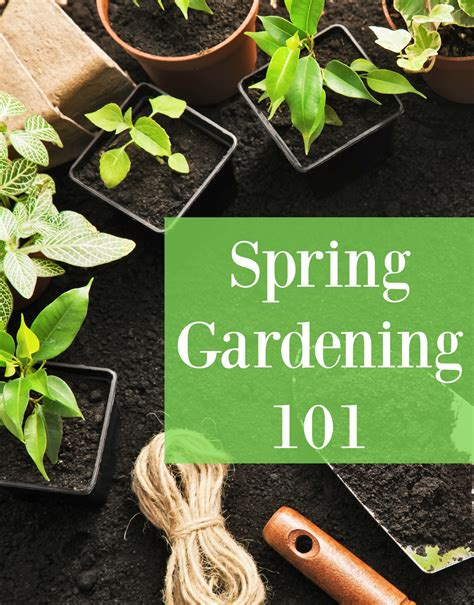 the deckchair gardener 101 cunning strategems for gardening avoidance and sensible advice on your realistic chances of getting away with it books gardening 101 save on veggies