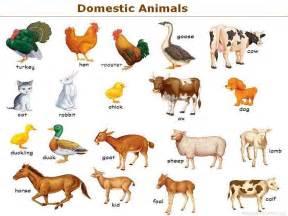 Black And White Wallpaper Bedroom Design - zwierzęta w gospodarstwie w rysunkach dla dzieci rolnictwo24 pl