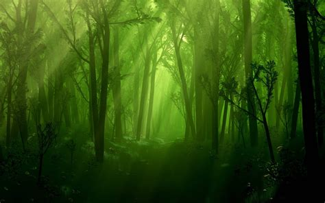 libro enchanted magical forests enchanted forest backgrounds wallpaper cave