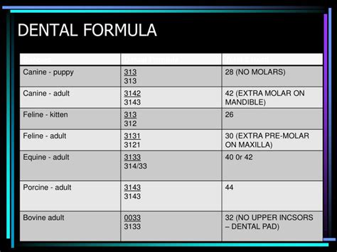 dental formula ppt ruminants anatomy powerpoint presentation id 1105191