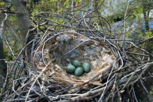 The Nest File Nest Moscow Jpg