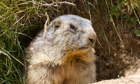 groundhog day groundhog beyond a shadow of a doubt groundhog day serves