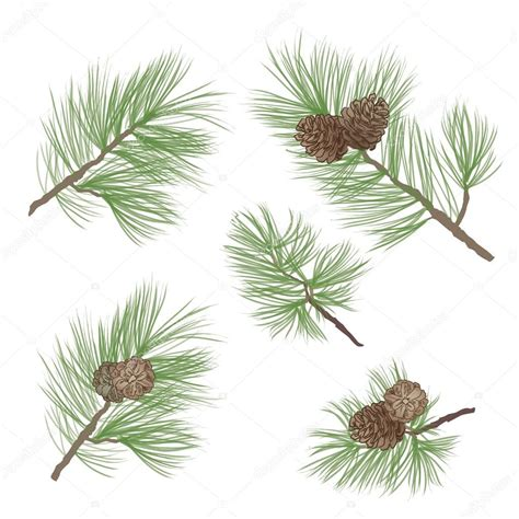 pine pattern stock pine tree branch seamless background forest seamless