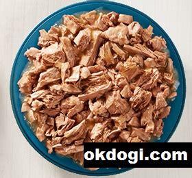 Makanan Basah Kucing Food pilih makanan basah atau kering untuk kucing simak okdogi