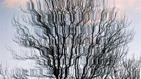 albero vanitoso albero vanitoso specchiato acqua regia foto n 5