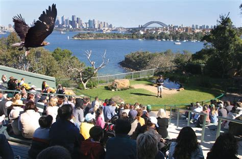 Home Planer taronga zoo sydney australia highlights experience
