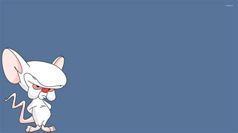 pinky wallpaper brain from pinky and the brain wallpaper cartoon