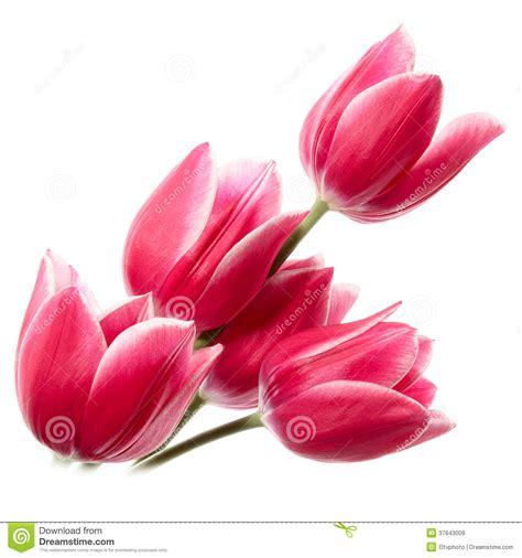 imagenes de flores libres flores finas im 225 genes de archivo libres de regal 237 as