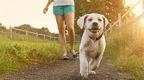 wann hund einschl fern ertrinken bewusstlosigkeit und verletzungen wann muss