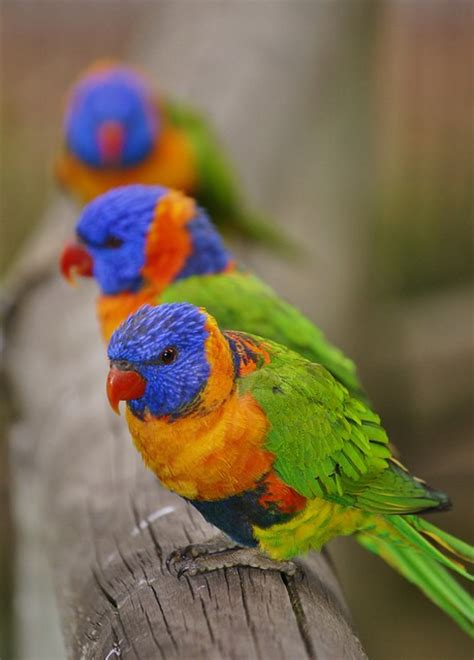 most beautiful colors top 10 rare colorful birds around the world most beautiful