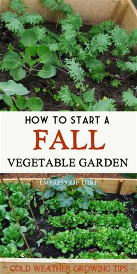 see how you can grow amazing vegetables in raised garden tomatoes to grow and types of tomatoes on pinterest