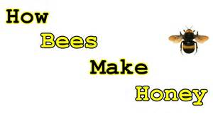 How Is Made How Do Bees Make Honey