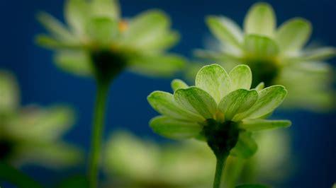 wallpaper green flower beautiful green flowers wallpaper 1920x1080 22551