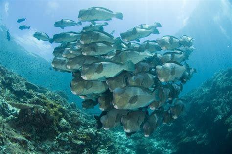 scuba diving  sipadan malaysia sipadan diving package