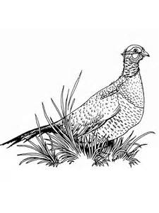 Pheasant Coloring Pages Download And Print sketch template