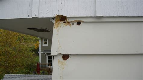 woodpecker holes in house siding 28 images siding