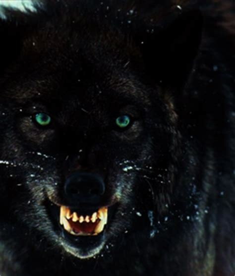 View topic - Where the Road Parts (Werewolf roleplay ... Growling Black Wolf With Yellow Eyes