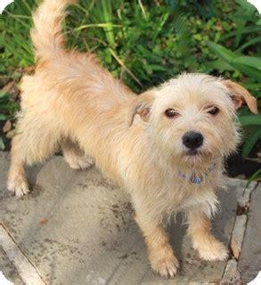 Veronica   adoption pending   Adopted Dog   Norwalk, CT