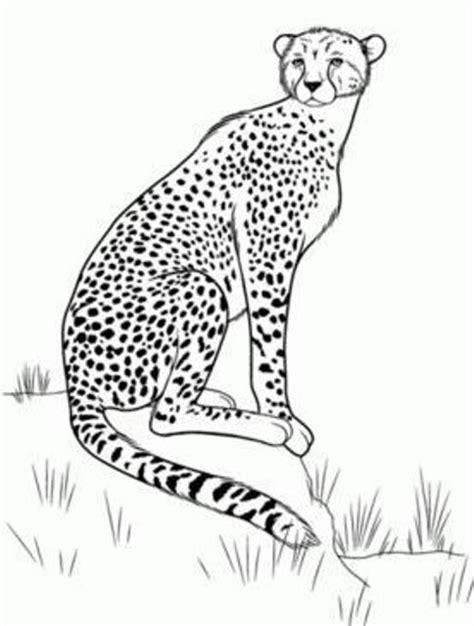 imagenes animales salvajes para colorear imagenes de animales salvajes para colorear e imprimir